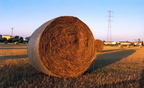 A bail of hay,round hay bale