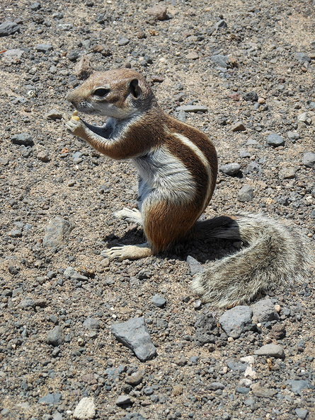 ground_squirrel_eat.jpg