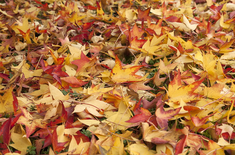 autumn_leaves_desktop_wallpaper.JPG