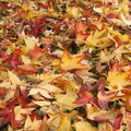 Autumn leaves desktop wallpaper
