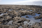 Intertidal rocky shore