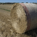 Large bales of hay