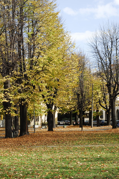 beautiful_autumn_trees.JPG