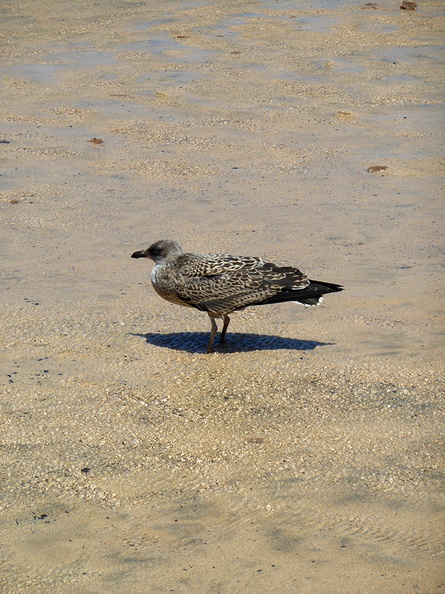 seagull_on_the_beach.jpg