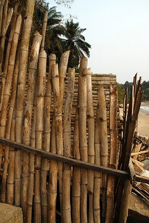 Bamboo in Africa