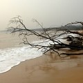 Dead branches on the sandy beach