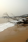 Dead branches, driftwood on the sandy beach