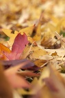 Fall leaves photo