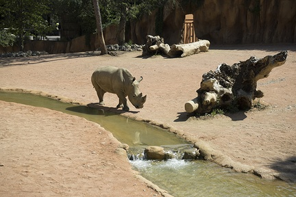 Wild animals rhinoceros, white rhine