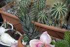 Home cactus plants,succulents in home
