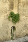 The green plant, plants in wall
