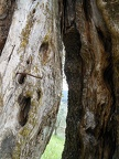 Trees with long trunks,big tree trunk