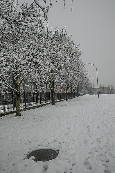 winter_snow_trees.JPG