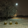 Snow and night, trees and snow