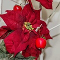 Red Christmas plant poinsettia