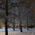 Snow covered trees images