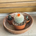 Cactus with red flower on top