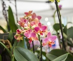 The pink orchid,orchid types images