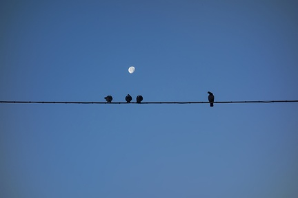 Blackbird on the wire