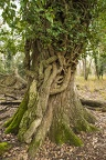 Photos of Beautiful Tree Art Nature