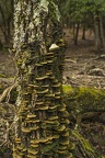 Green fungus on trees