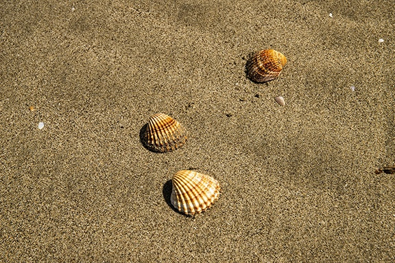 Sea shells wallpapers, free background PC
