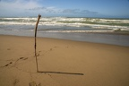 Dead branch on the beach