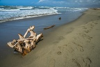Dry piece of wood, driftwood on beach