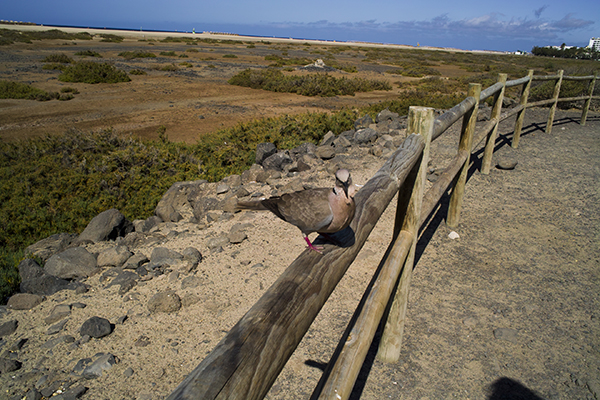 photo_of_dove_bird.jpg