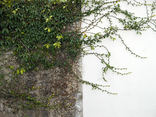 branches_on_the_wall.JPG