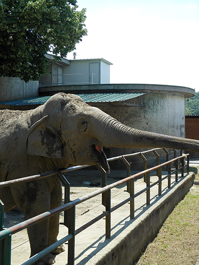 elephant_at_zoo.JPG
