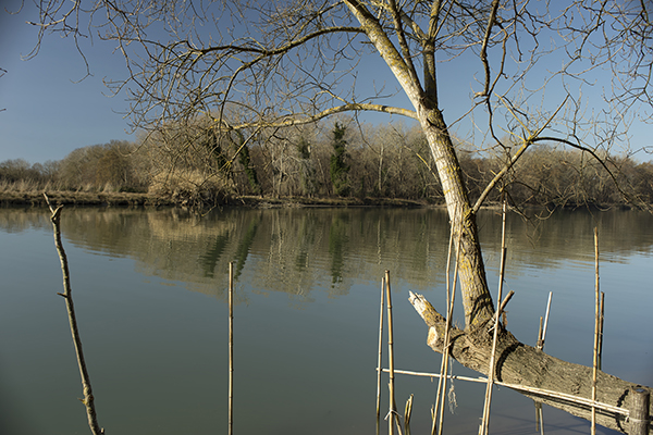 lake_with_dead_trees.jpg