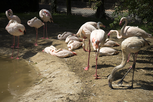 white_flamingo_bird.jpg