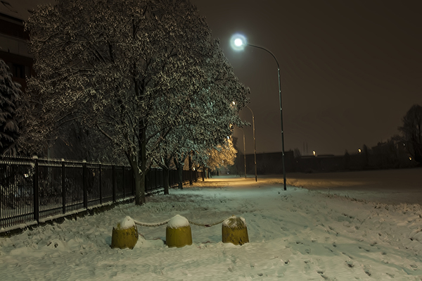 snow_and_night_trees_and_snow.JPG