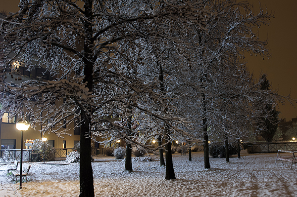 snow_covered_trees_images.JPG